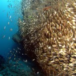 big-cave_glassfish-2